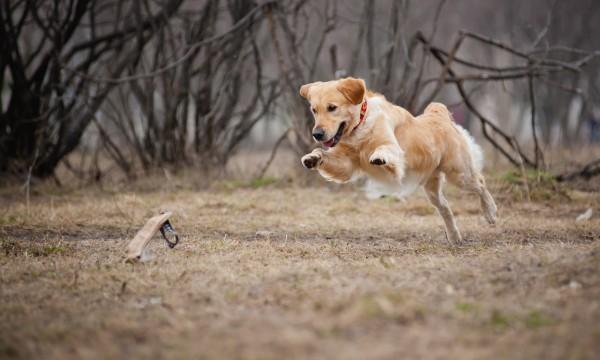 Soigner les piqûres des insectes qui attaquent votre chien ...