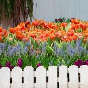 Choisir des plantes annuelles et des plantes pérennes pour le jardin