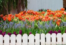 Cultivez des plantes vivaces en bonne santé à partir de graines en 5 étapes faciles