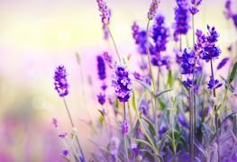 2 plantes fabuleuses pour soigner la déprime