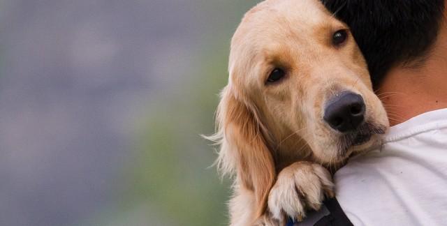 Remèdes naturels pour animaux: constipation et diarrhée