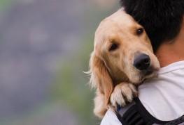 Soigner votre animal au naturel