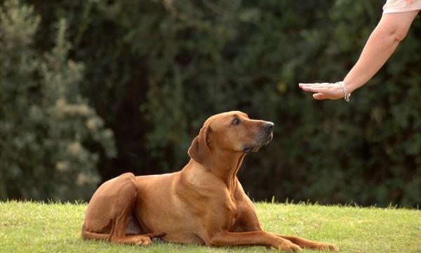 Toursque vous pouvez enseignerà n'importe quel chien