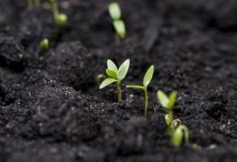 Quelques conseils pour travailler avec un sol alcalin