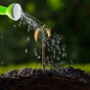 Un service d'entretien d'arbres est-il crucial?