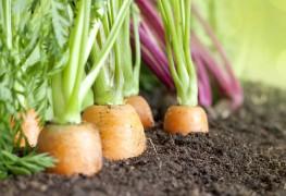Conseils pour faire pousser vos légumes biologiques dans votre jardin