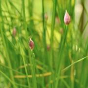 Votre guide complet des herbes du jardin: B àC