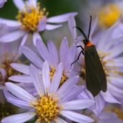 Pièges faits maison contre les insectes dans votre jardin