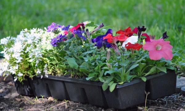 3 produits improbables pour stimuler la croissance de vos plantes