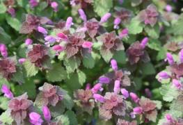 7 faits sur lelamierque tous les jardiniers doiventconnaître