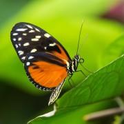 Des moyens simples pour attirer les papillons et les oiseaux dans votre jardin