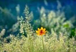 Conseils pour choisir et planter des graminées ornementales
