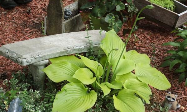 Entretenir des plantes dans un jardin sec et ombragé