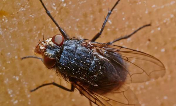 Alerte aux envahisseurs : combattre mouches et araignées