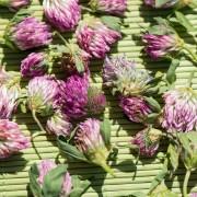 Préservezvos fleurs grâce au séchage par absorption