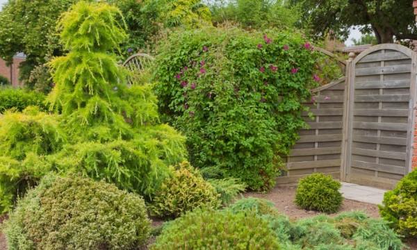 d couvrez 5 plantes ligneuses r sistantes la s cheresse et apprenez comment les planter. Black Bedroom Furniture Sets. Home Design Ideas
