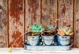 Quelques conseils pour entretenirles jardins en contenants quand vient l'hiver