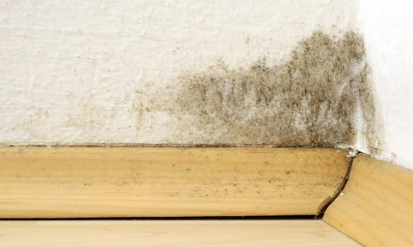 conseils pour nettoyer un mur de la moisissure trucs pratiques. Black Bedroom Furniture Sets. Home Design Ideas