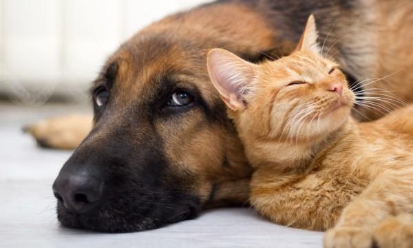Conseils dedéménagementpour les propriétaires d'animaux