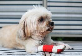 Comment guérir les blessures de votre chien qui boite