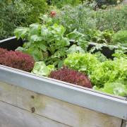 Comment construire des parterres de jardin surélevés en 5 étapes faciles