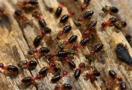 4 insectes nuisibles qui peuvent ronger votre maison