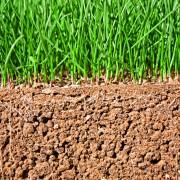 Quel type de terre utiliser dans mon jardin?