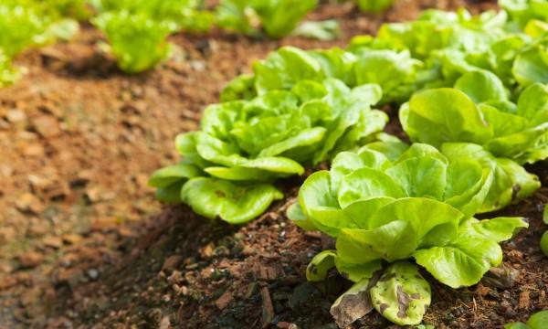 Conseils pour protéger votre jardin bio des ravageurs