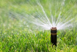 12 conseils pour irriguer votre jardin avec vos eaux grises