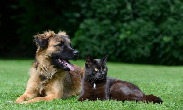 Des remèdes naturels pour vos animaux domestiques