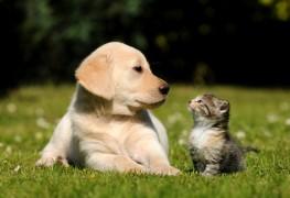 Comment les propriétaires potentiels d'animaux économisent du temps et de l'argent