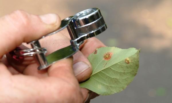 Comment éliminer les maladies fongiques des plantes