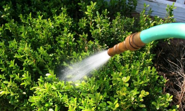 3 moyens faciles d'économiser de l'eau dans le jardin