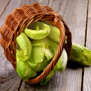 Jardinage vert : cultiver la chicorée