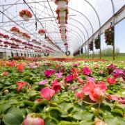 Comment planter les plantes vivaces
