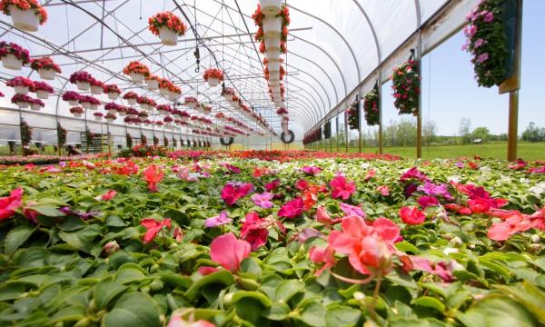 Comment planter les plantes vivaces trucs pratiques for Les plantes vivaces