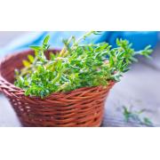 Conseils utiles pour cultiver du thym dans son jardin