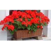 Trucs utiles et pratiques : concevoir sa propre jardinière