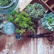 Comment bouturerles plantes dans votre jardin