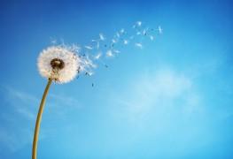 3 remèdes maisons pour lutter contre vos maladies respiratoires