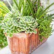 3 conseils pour faire pousser des plantes en pot