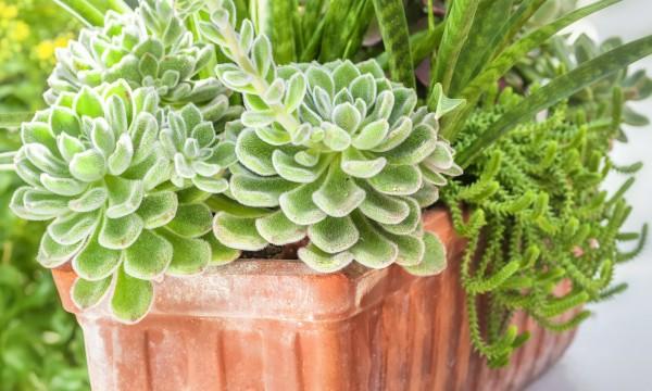 3 conseils pour faire pousser des plantes en pot trucs pratiques. Black Bedroom Furniture Sets. Home Design Ideas