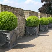 Guide d'expert pour faire pousser des arbustes en pot