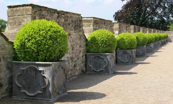 guide d 39 expert pour faire pousser des arbustes en pot. Black Bedroom Furniture Sets. Home Design Ideas
