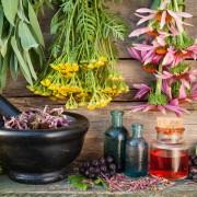 5 fines herbes indispensablesà avoirdans son jardin