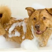 Soigner et laver son animal de compagnie au naturel