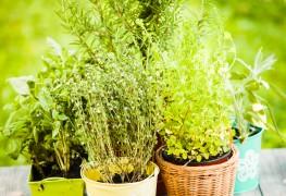 4 idées faciles de produits naturels pour parfumer la maison