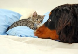 Des soins maison efficaces pour votre chat et votre chien