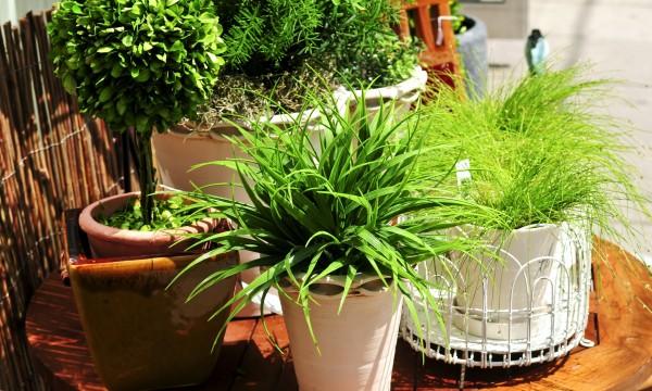 5 conseils utiles pour des plantes d'intérieur en bonne santé