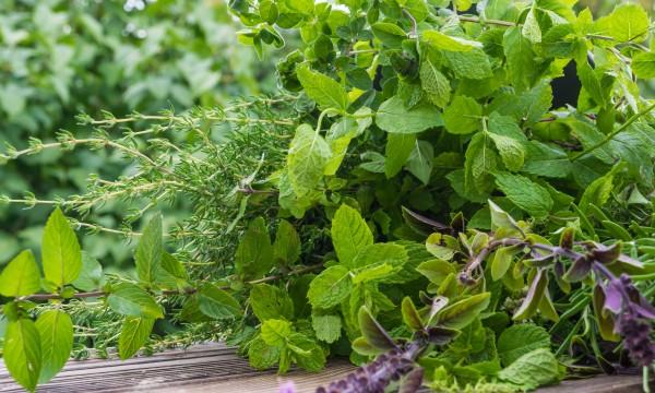 Astuces efficaces : concevoir votre jardin d'herbes médicinales et aromatiques